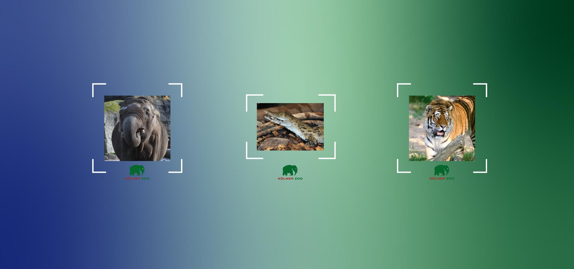AR/TENSCHUTZ Lenses Koelner Zoo